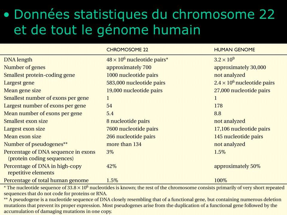 Données statistiques du chromosome 22 et de tout le génome humain