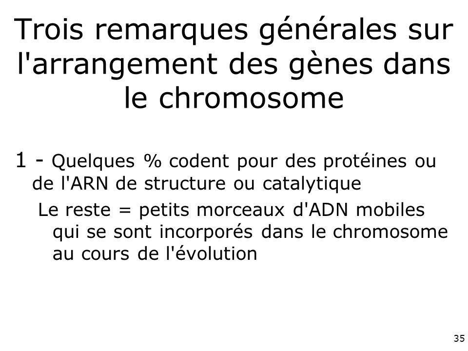 Trois remarques générales sur l arrangement des gènes dans le chromosome