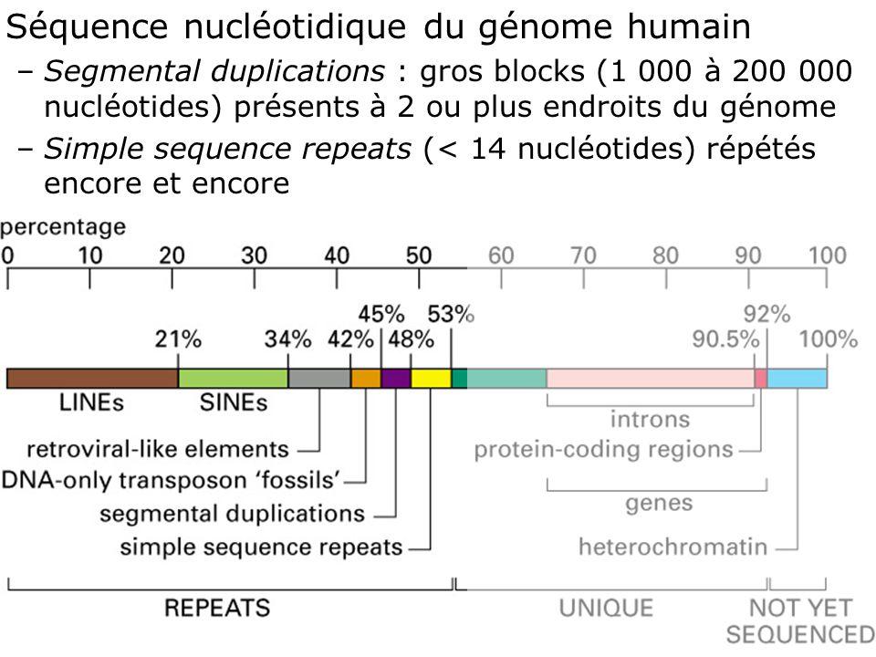 Fig 4-17 Séquence nucléotidique du génome humain