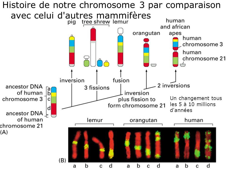 Histoire de notre chromosome 3 par comparaison avec celui d autres mammifères