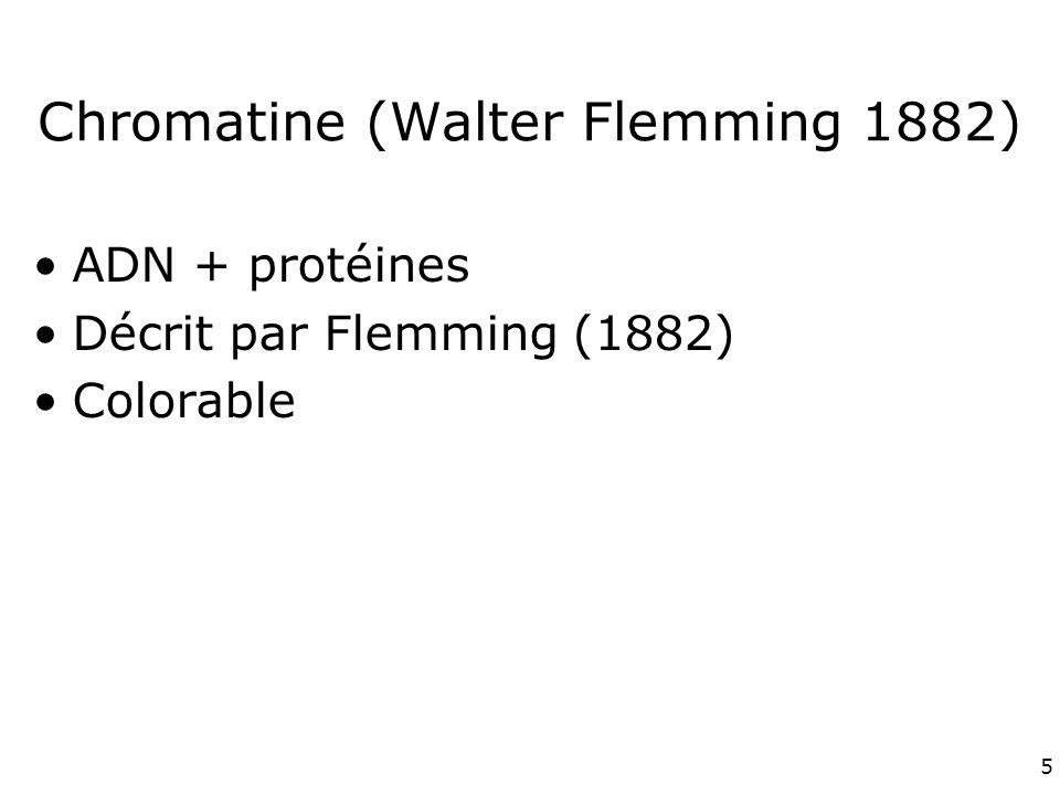 Chromatine (Walter Flemming 1882)