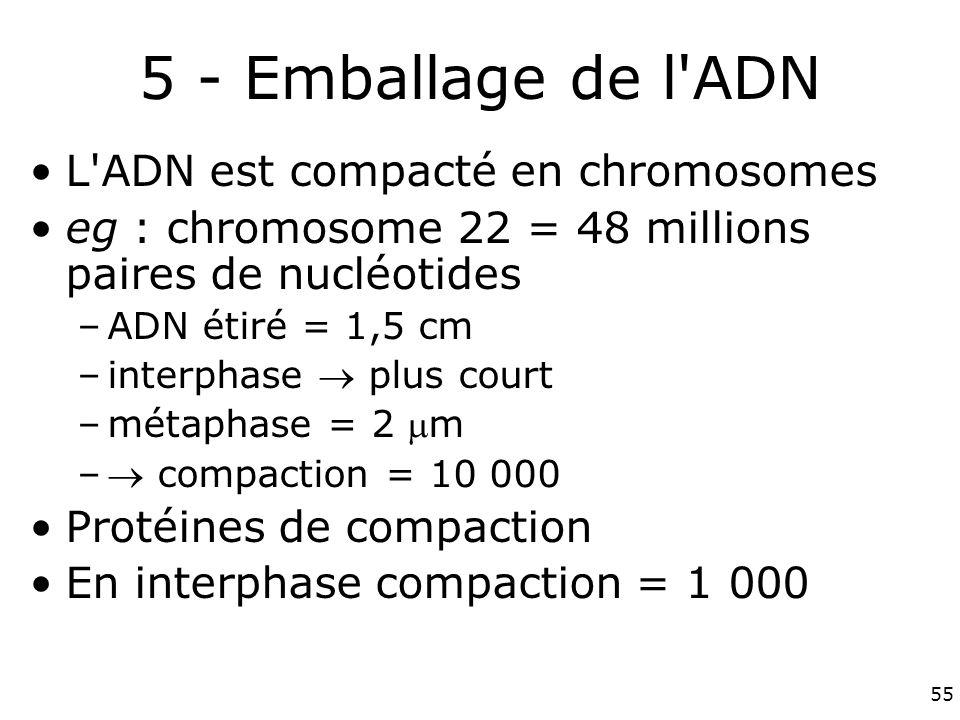 5 - Emballage de l ADN L ADN est compacté en chromosomes