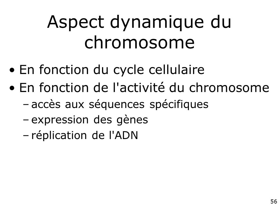 Aspect dynamique du chromosome