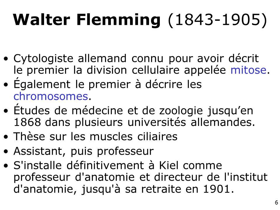 Walter Flemming (1843-1905) Cytologiste allemand connu pour avoir décrit le premier la division cellulaire appelée mitose.