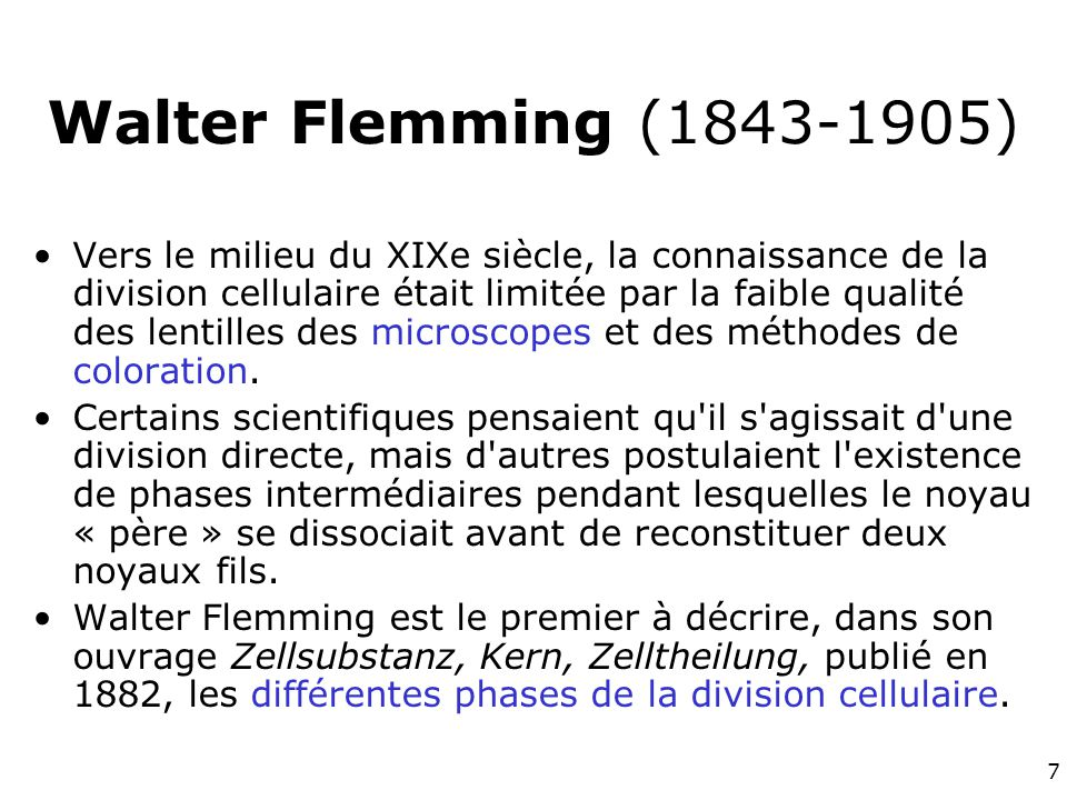 Walter Flemming (1843-1905)