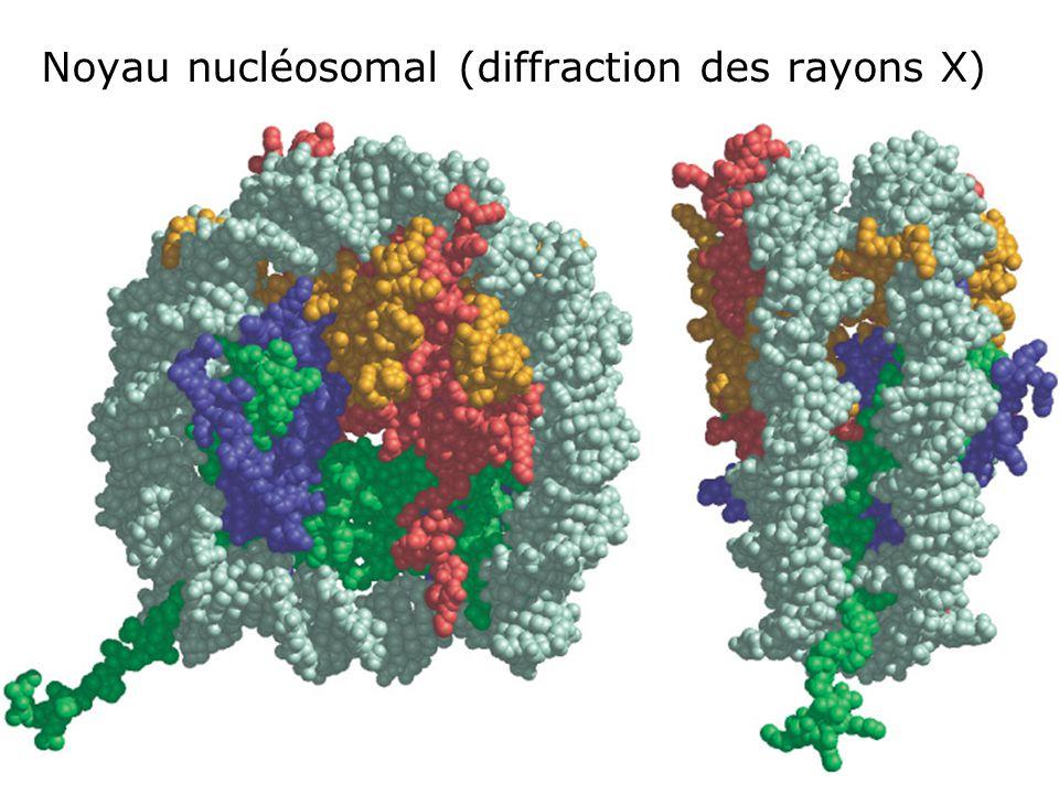 Noyau nucléosomal (diffraction des rayons X)