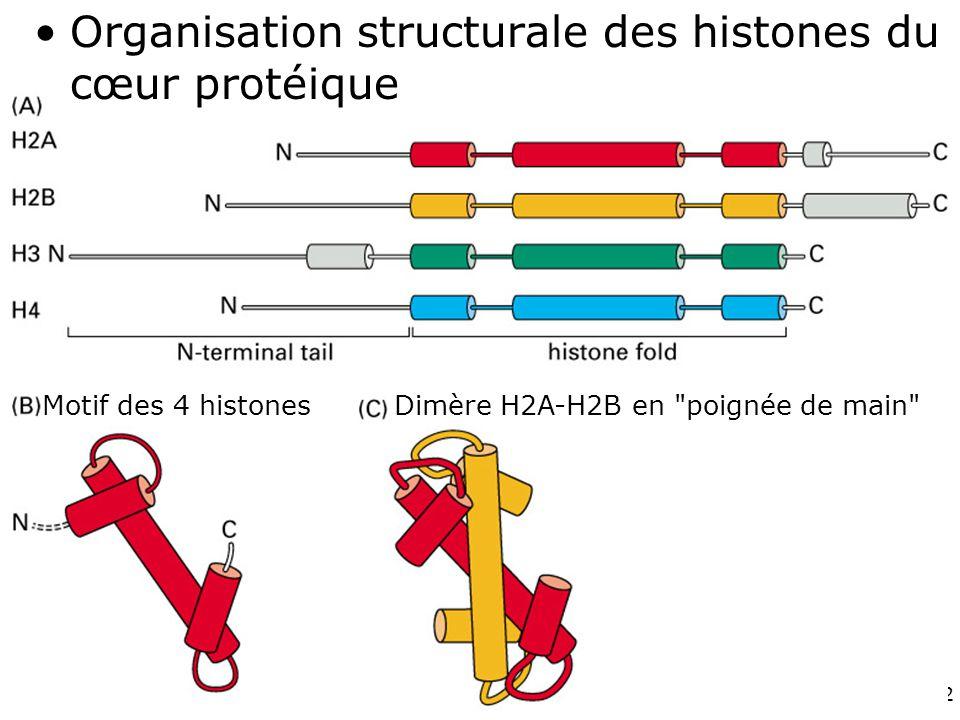 Fig 4-26 Organisation structurale des histones du cœur protéique