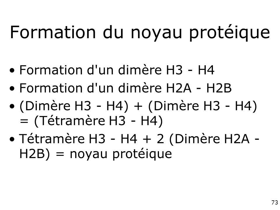 Formation du noyau protéique