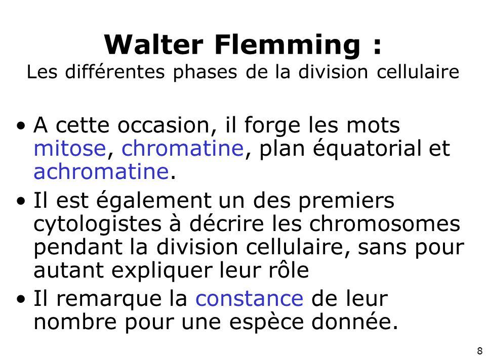 Walter Flemming : Les différentes phases de la division cellulaire