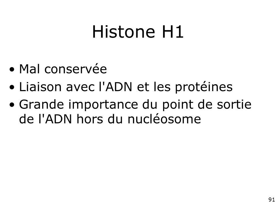 Histone H1 Mal conservée Liaison avec l ADN et les protéines