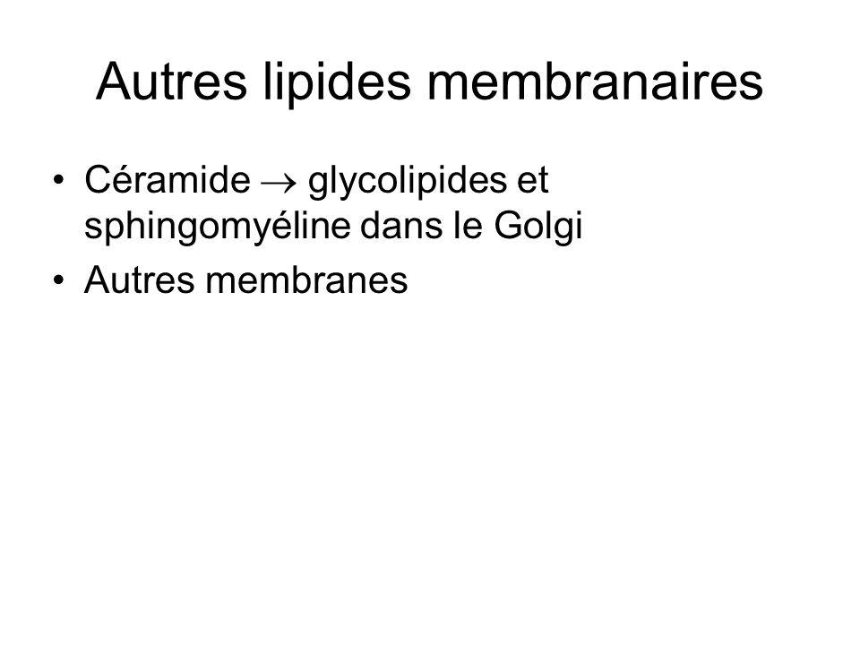Autres lipides membranaires