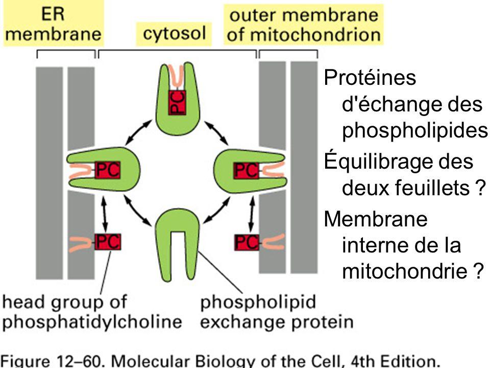 Fig 12-60 Protéines d échange des phospholipides
