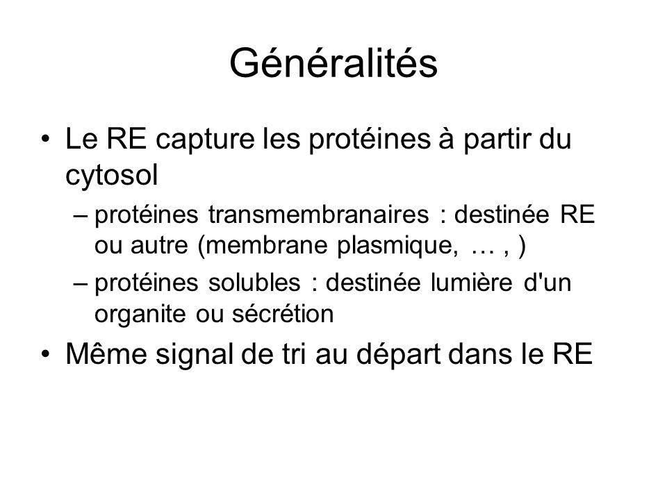 Généralités Le RE capture les protéines à partir du cytosol