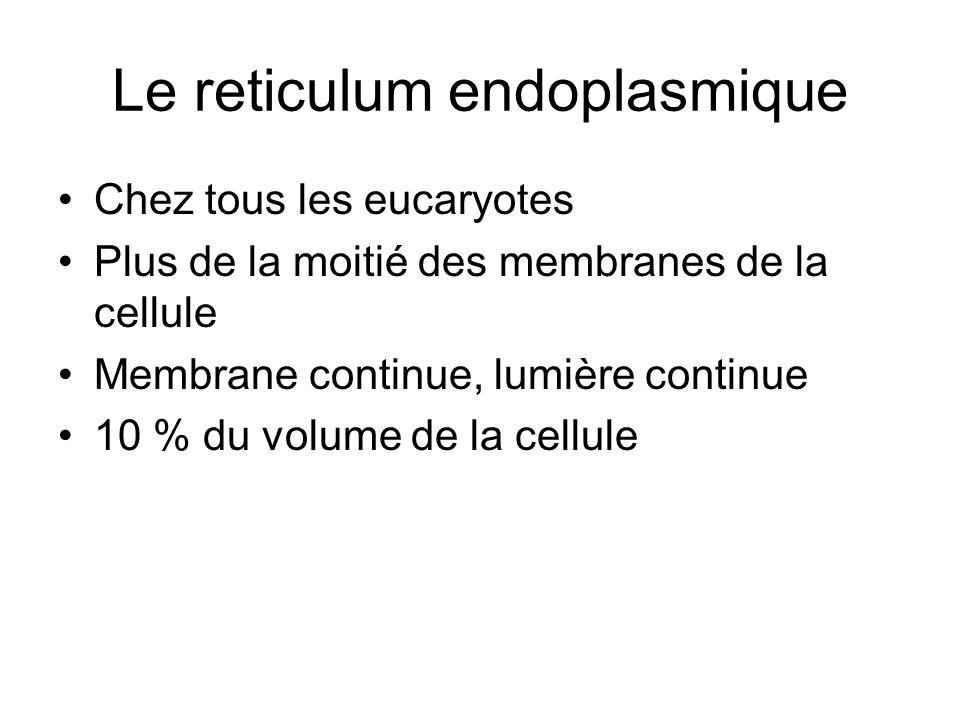 Le reticulum endoplasmique