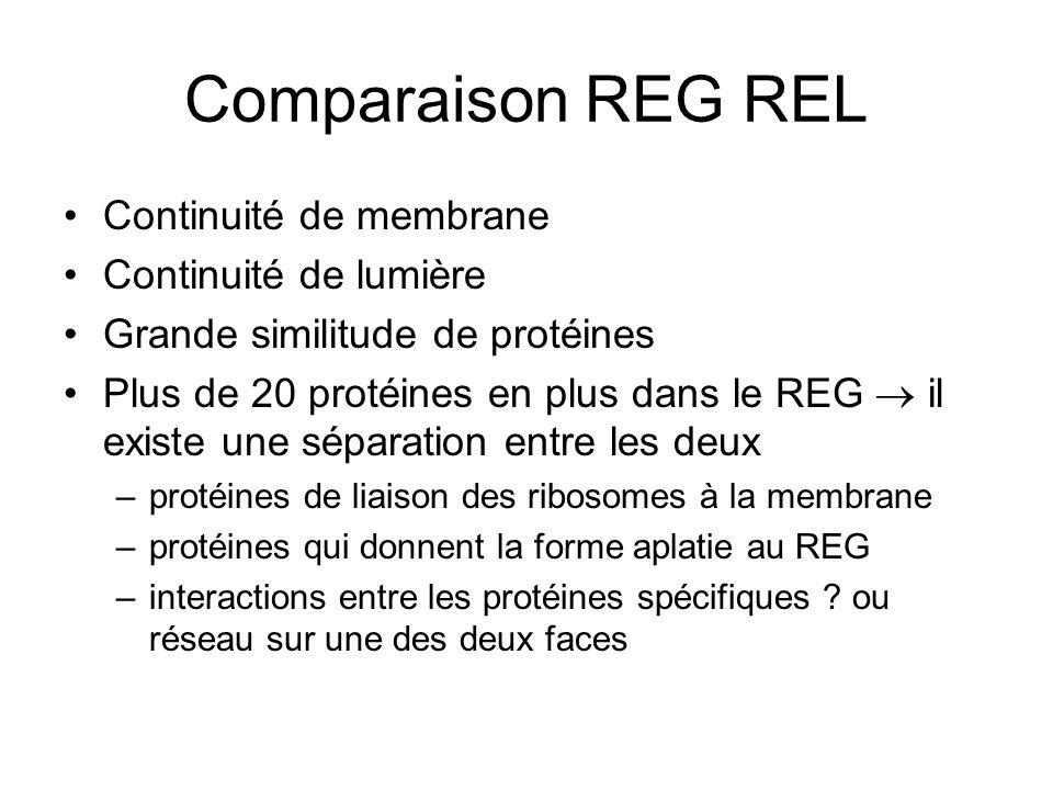 Comparaison REG REL Continuité de membrane Continuité de lumière