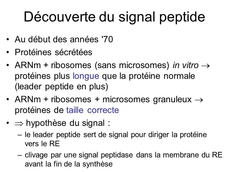 Découverte du signal peptide