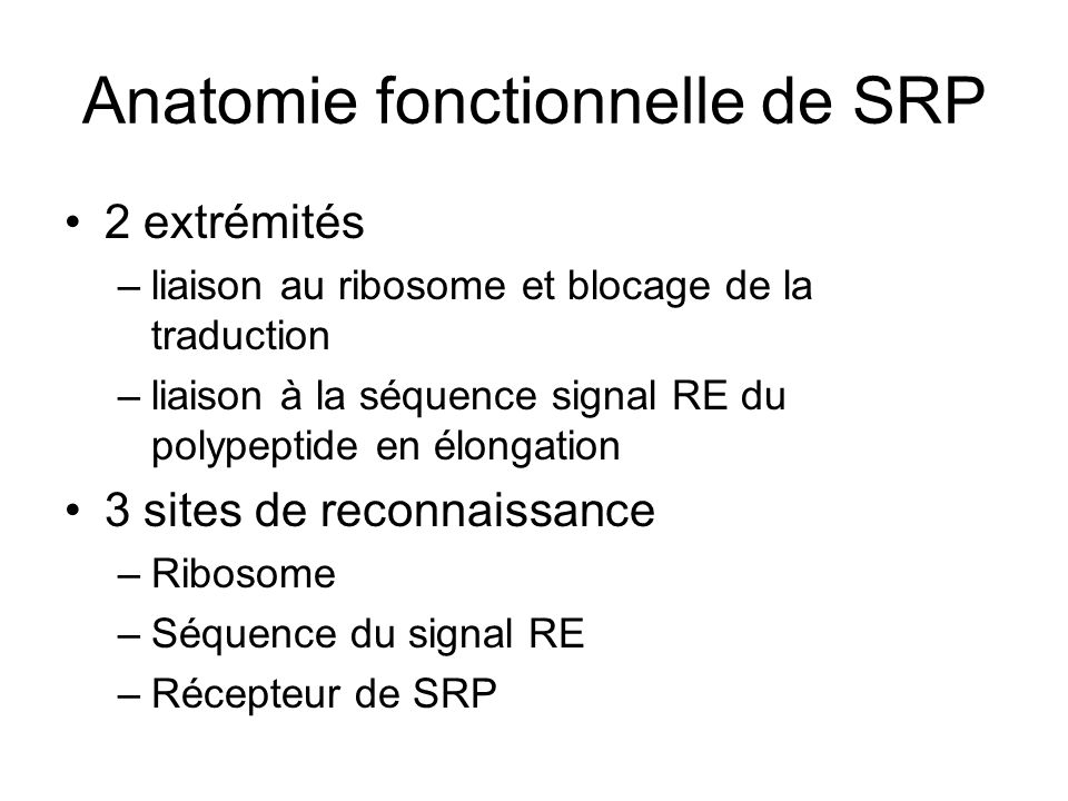Anatomie fonctionnelle de SRP