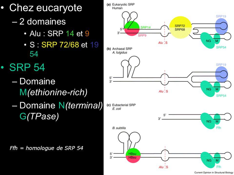 Wild,K2002 fig1 Chez eucaryote SRP 54 2 domaines