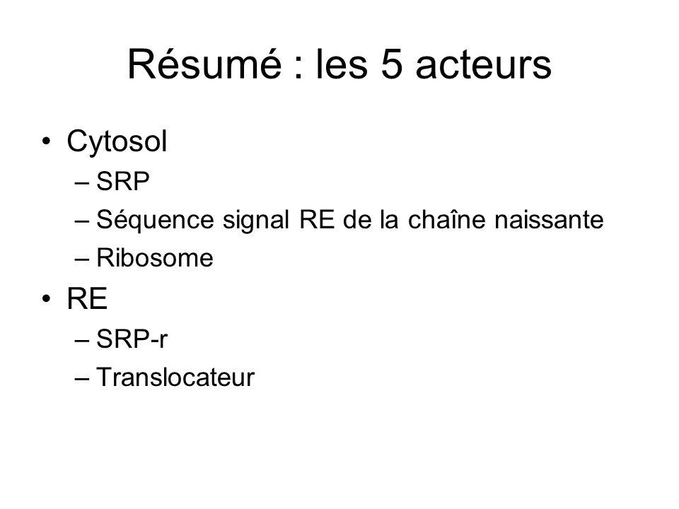 Résumé : les 5 acteurs Cytosol RE SRP