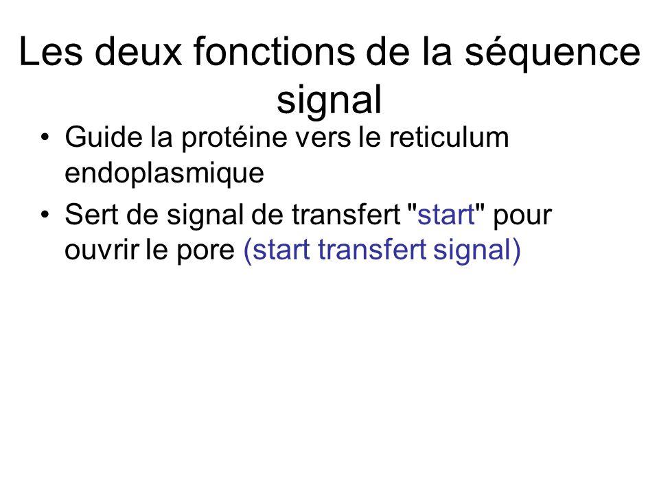 Les deux fonctions de la séquence signal
