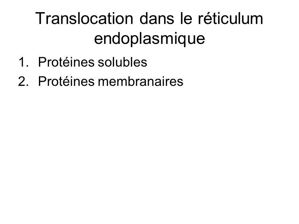 Translocation dans le réticulum endoplasmique