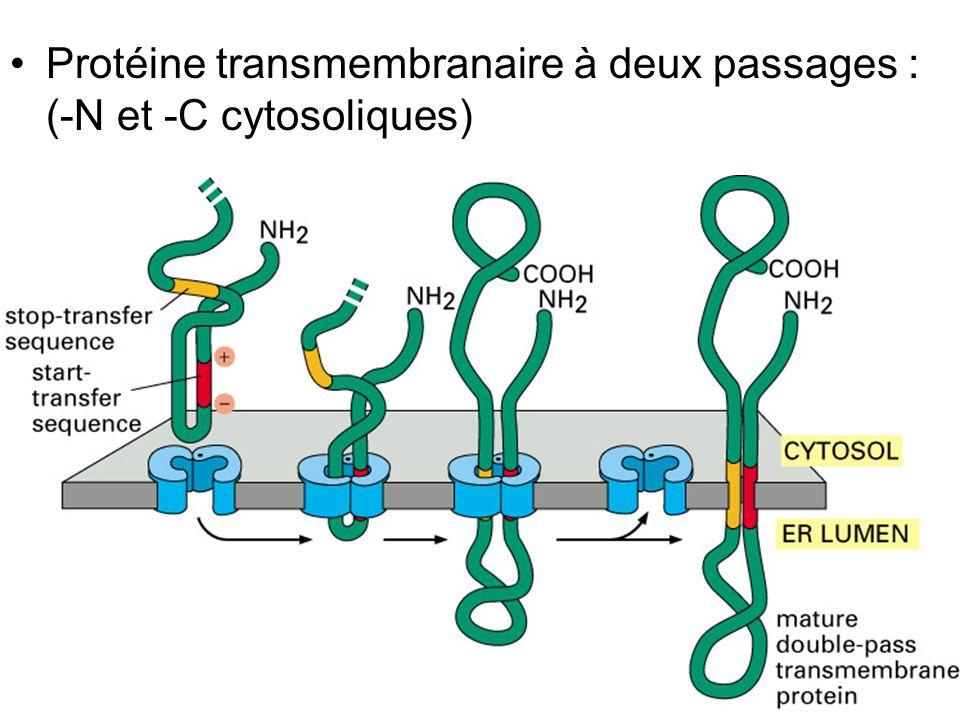 Jeudi 27 septembre 2007 Protéine transmembranaire à deux passages : (-N et -C cytosoliques) Fig 12-49.