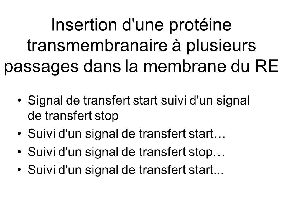 Insertion d une protéine transmembranaire à plusieurs passages dans la membrane du RE
