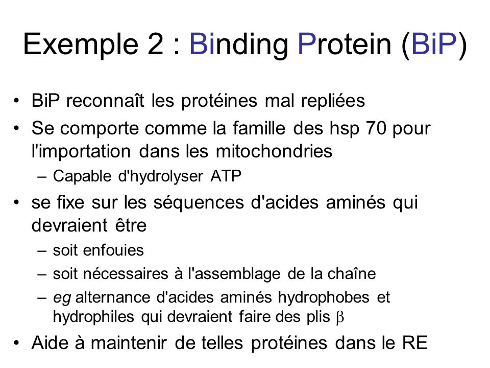 Exemple 2 : Binding Protein (BiP)