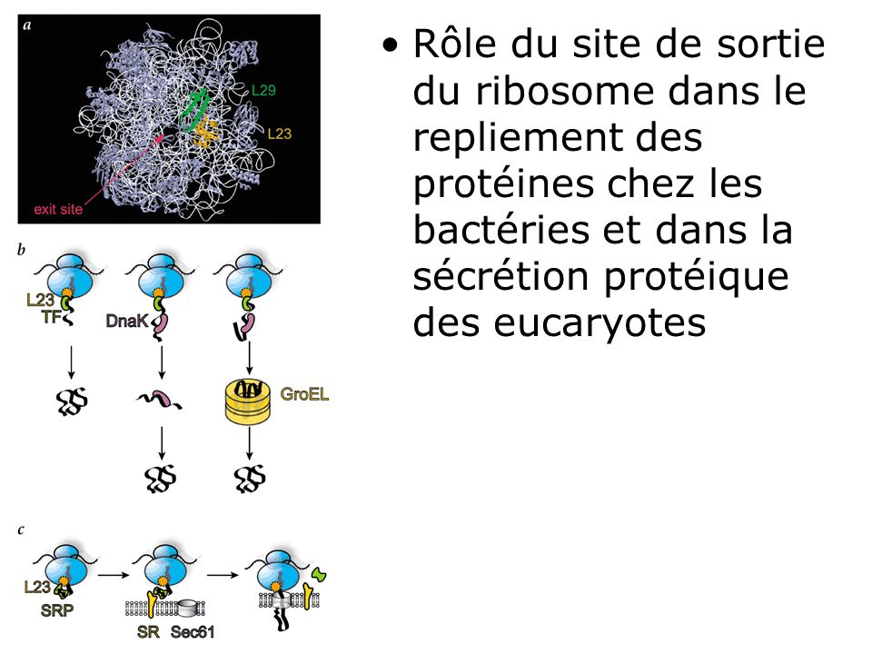 Nat Struct Biol : Albanèse,V2002(fig1)