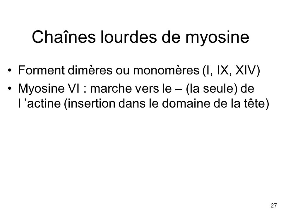 Chaînes lourdes de myosine