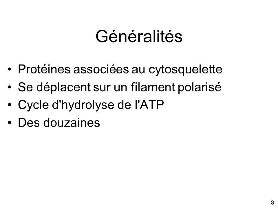 Généralités Protéines associées au cytosquelette