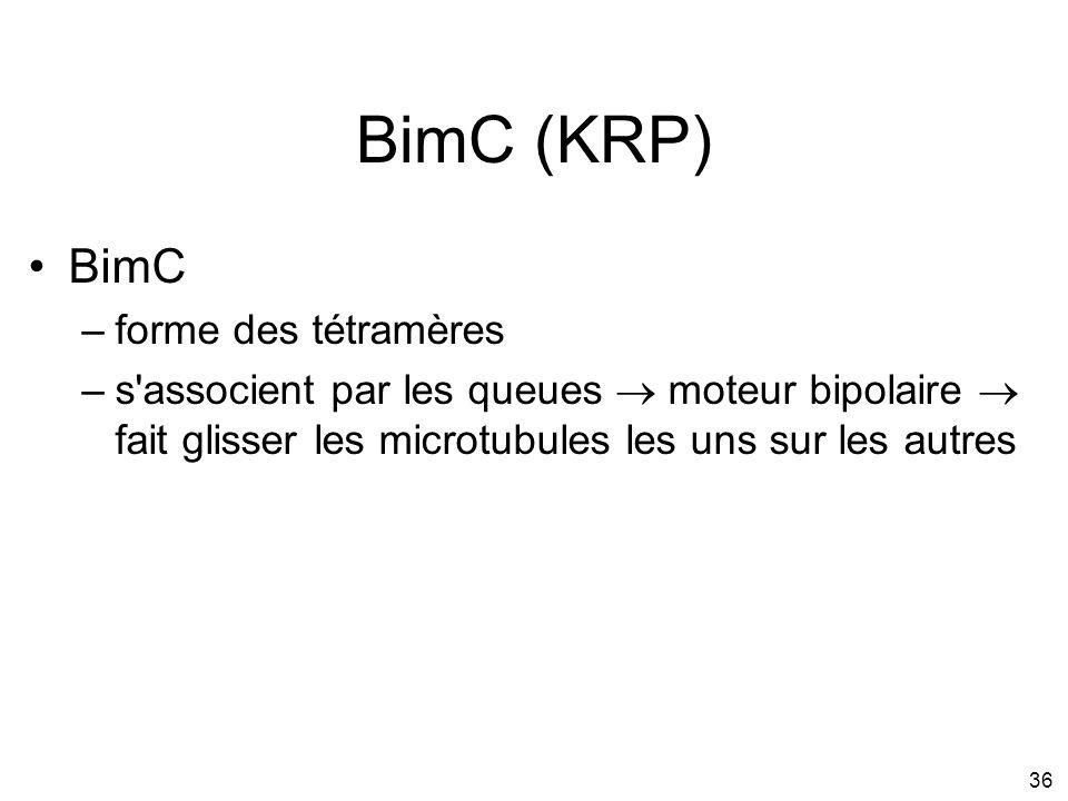 BimC (KRP) BimC forme des tétramères