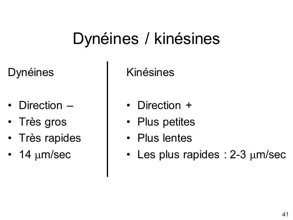 Dynéines / kinésines Dynéines Direction – Très gros Très rapides