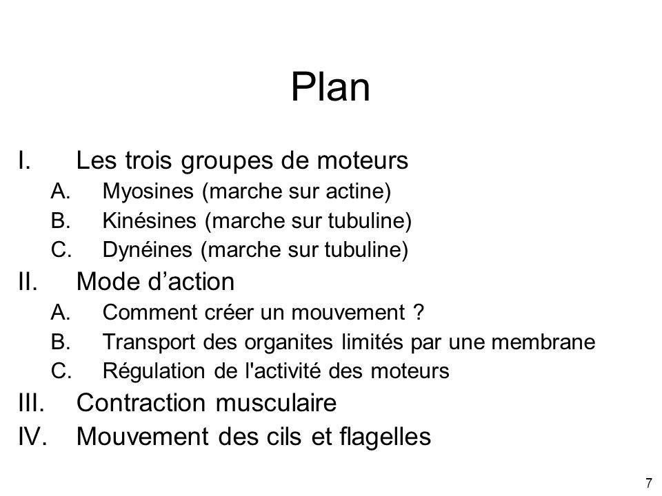 Plan Les trois groupes de moteurs Mode d'action Contraction musculaire