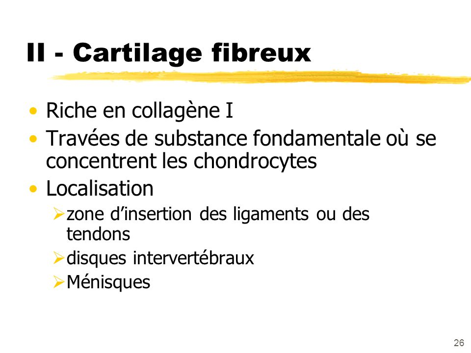 II - Cartilage fibreux Riche en collagène I