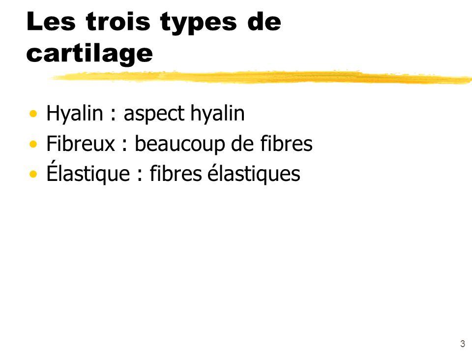 Les trois types de cartilage