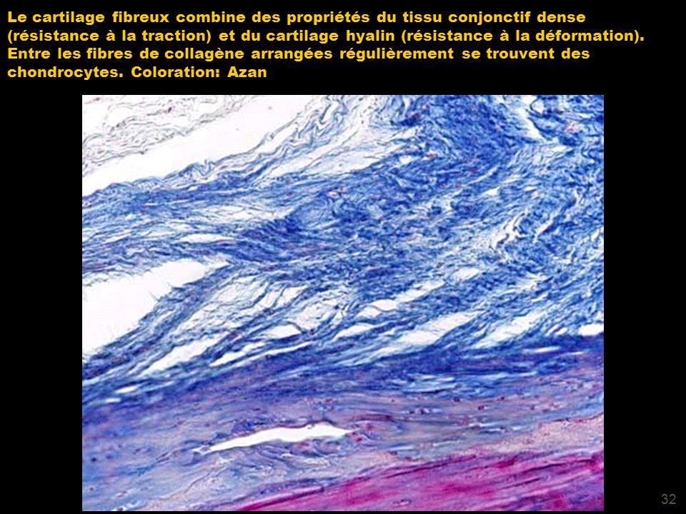Le cartilage fibreux combine des propriétés du tissu conjonctif dense (résistance à la traction) et du cartilage hyalin (résistance à la déformation).