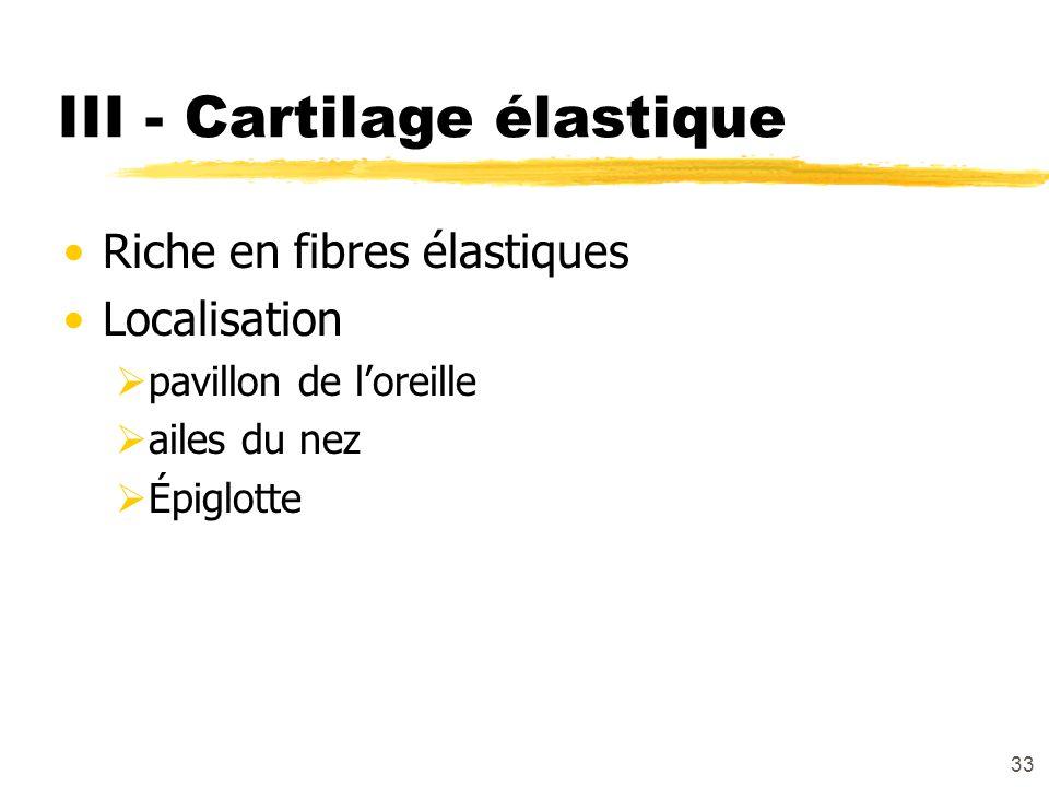 III - Cartilage élastique