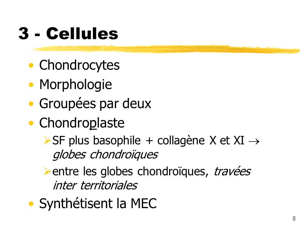 3 - Cellules Chondrocytes Morphologie Groupées par deux Chondroplaste