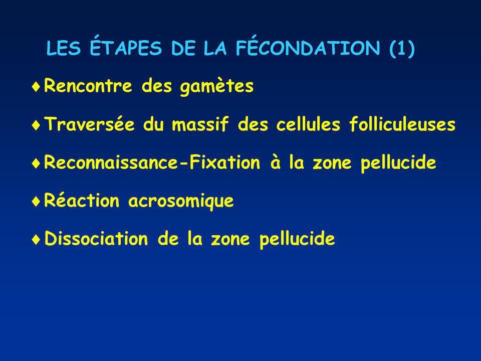 LES ÉTAPES DE LA FÉCONDATION (1)