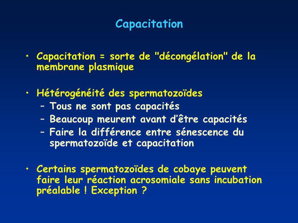 Capacitation Capacitation = sorte de décongélation de la membrane plasmique. Hétérogénéité des spermatozoïdes.