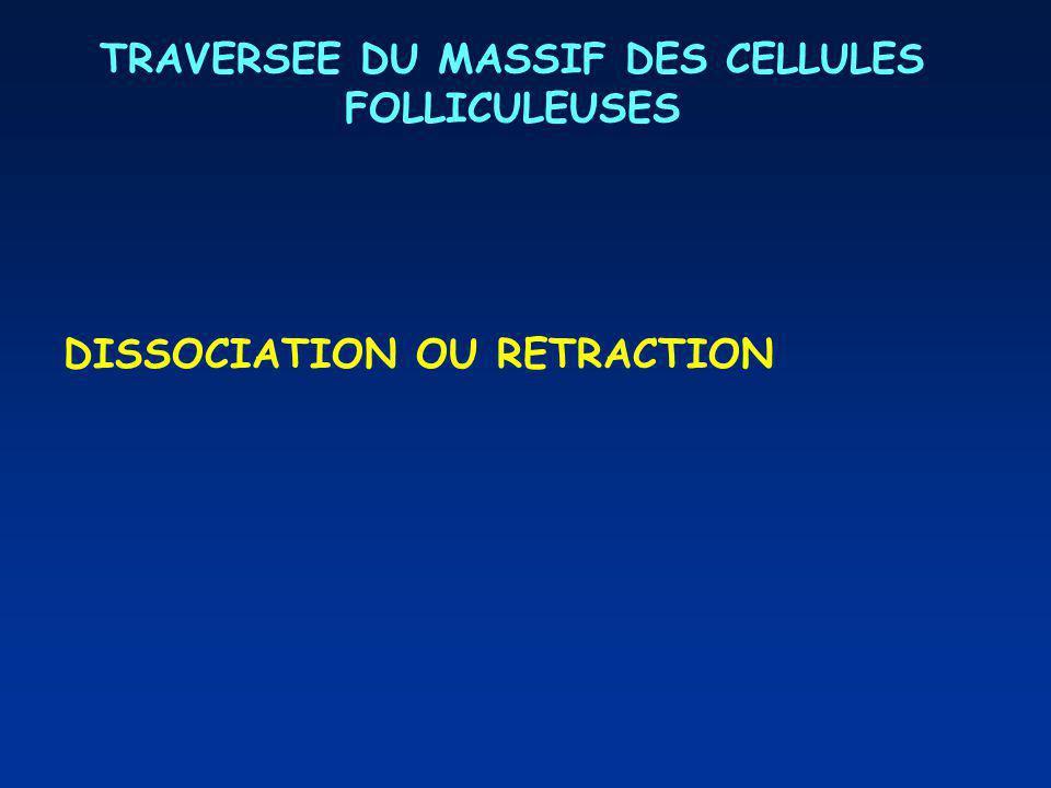 TRAVERSEE DU MASSIF DES CELLULES FOLLICULEUSES