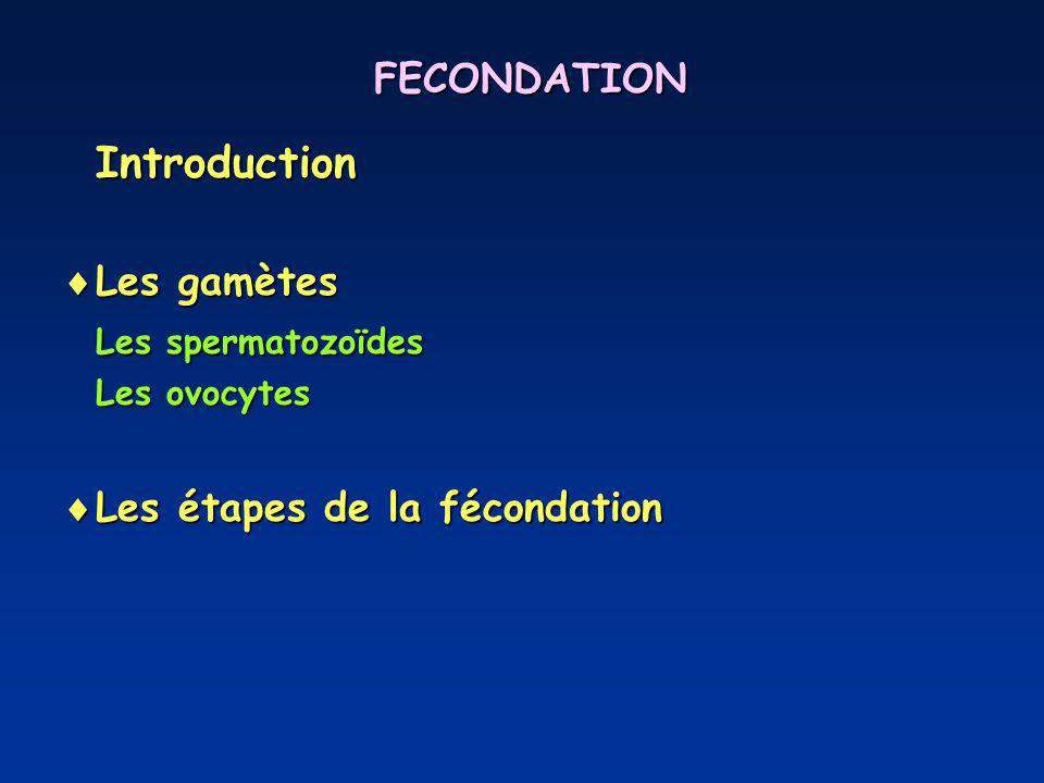 Introduction FECONDATION Les gamètes Les spermatozoïdes
