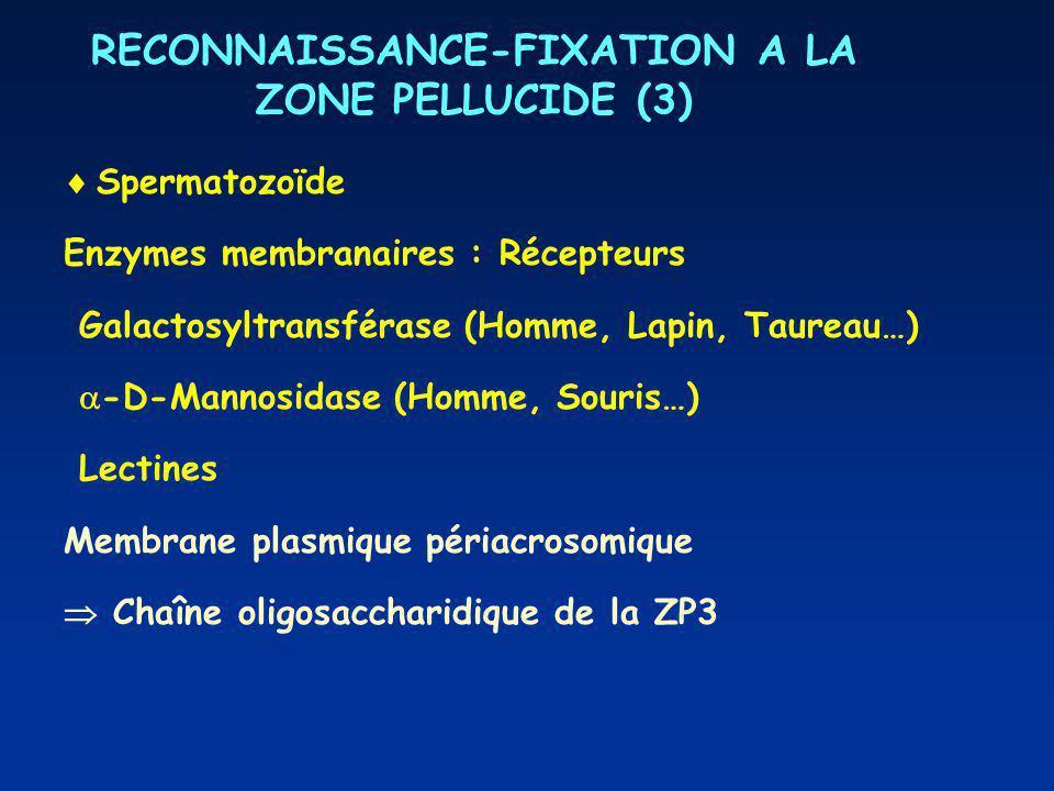 RECONNAISSANCE-FIXATION A LA ZONE PELLUCIDE (3)