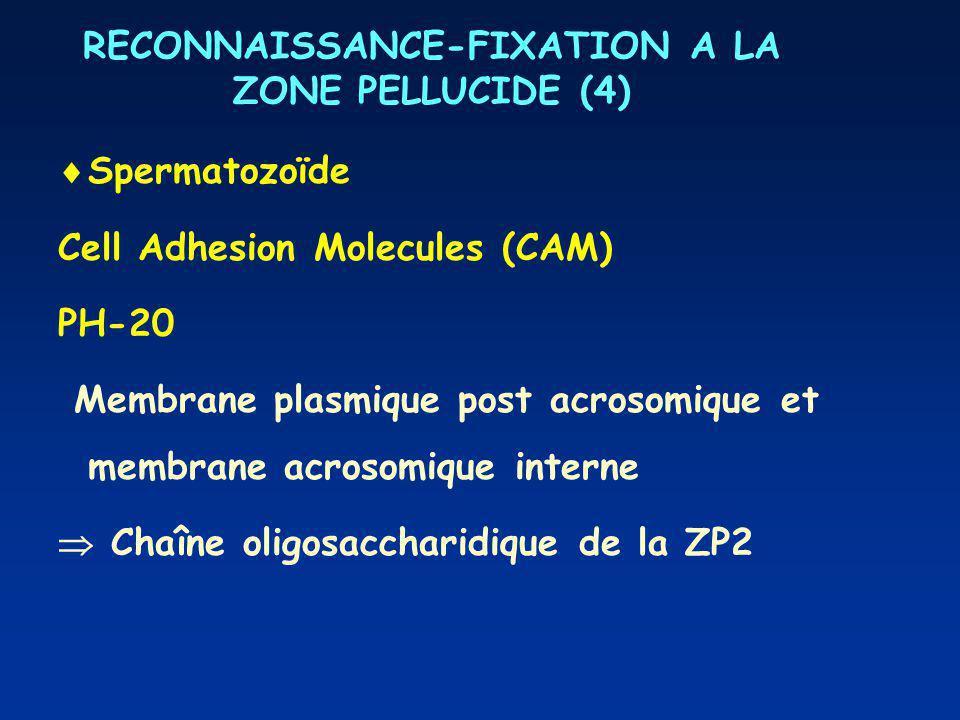 RECONNAISSANCE-FIXATION A LA ZONE PELLUCIDE (4)