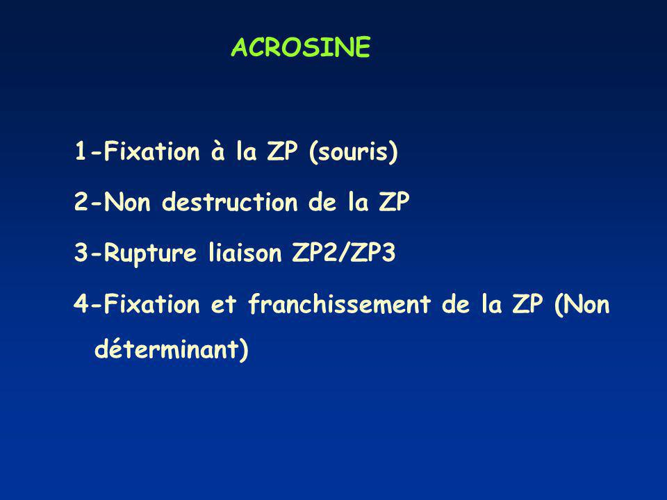 ACROSINE 1-Fixation à la ZP (souris) 2-Non destruction de la ZP