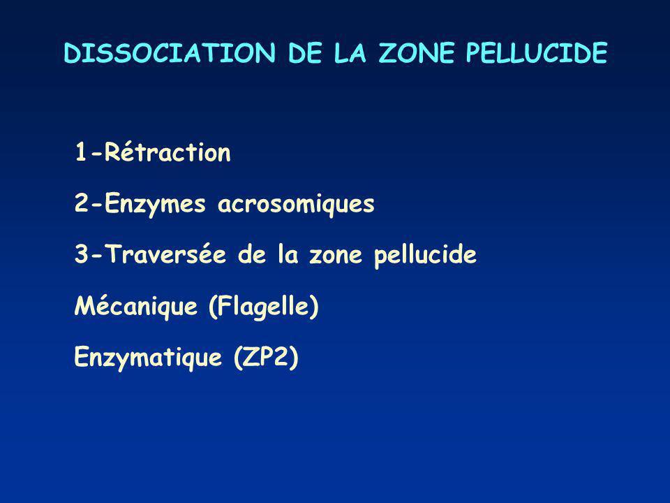 DISSOCIATION DE LA ZONE PELLUCIDE