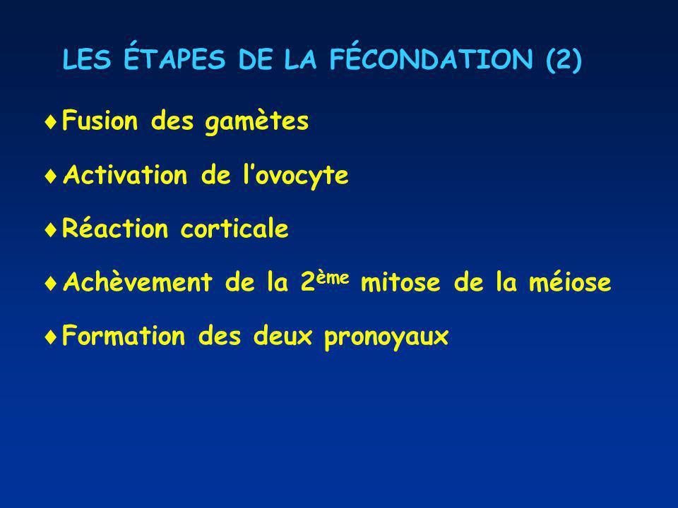 LES ÉTAPES DE LA FÉCONDATION (2)