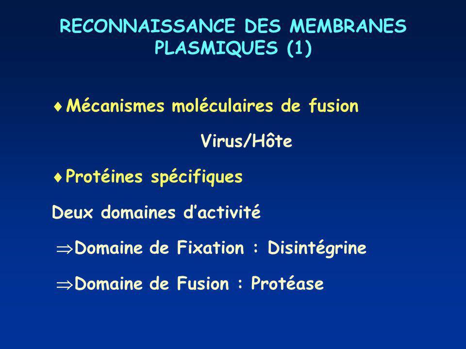 RECONNAISSANCE DES MEMBRANES PLASMIQUES (1)