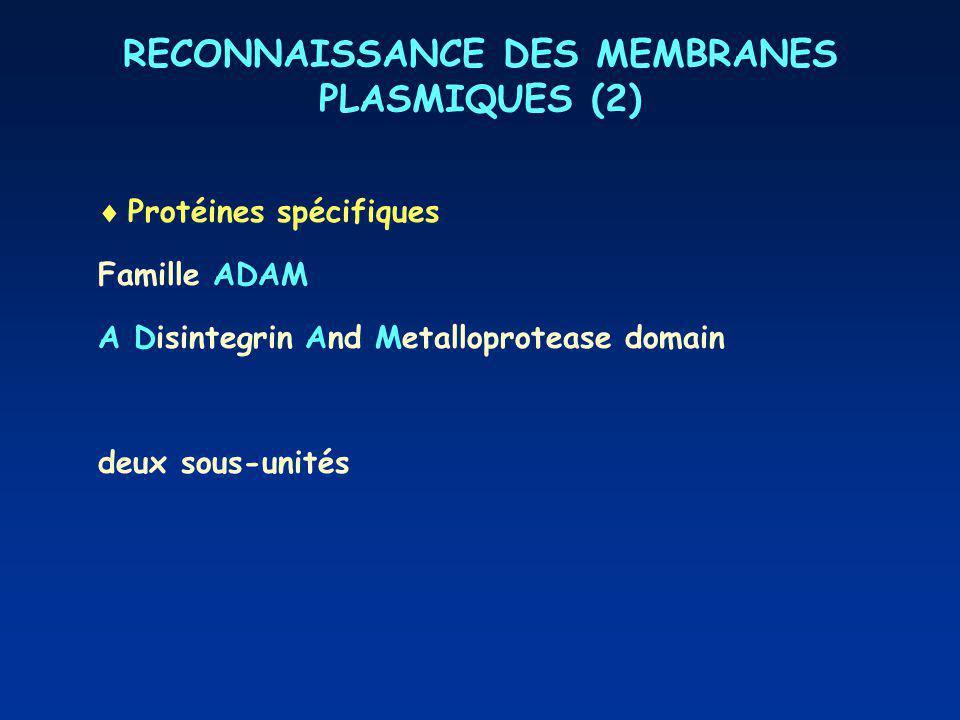 RECONNAISSANCE DES MEMBRANES PLASMIQUES (2)